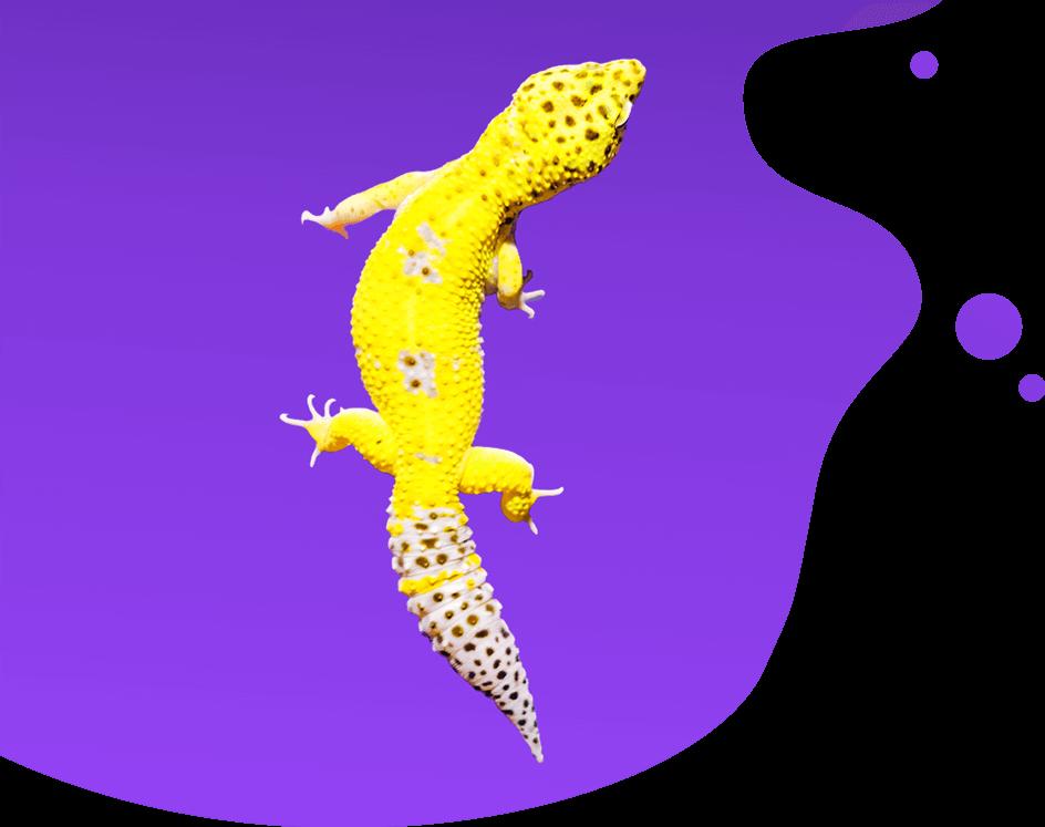Violetti gekko -kuvituskuva